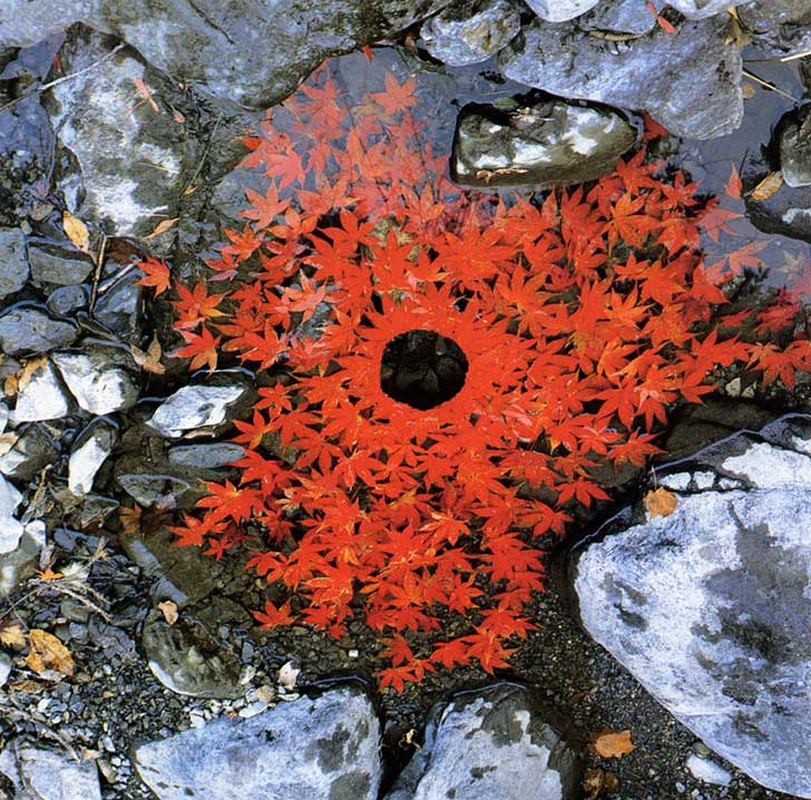 land-art-andy-goldsworthy-610