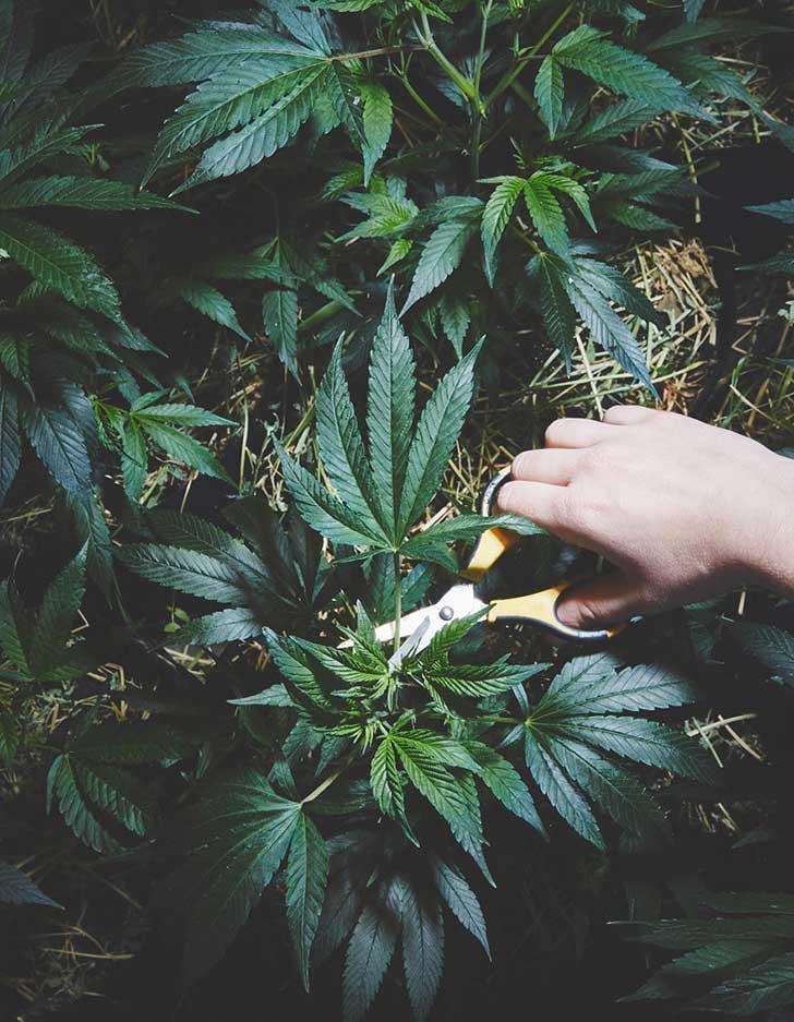 nuns-grow-marjuana-sisters-of-the-valley-shaughn-crawford-john-dubois-19