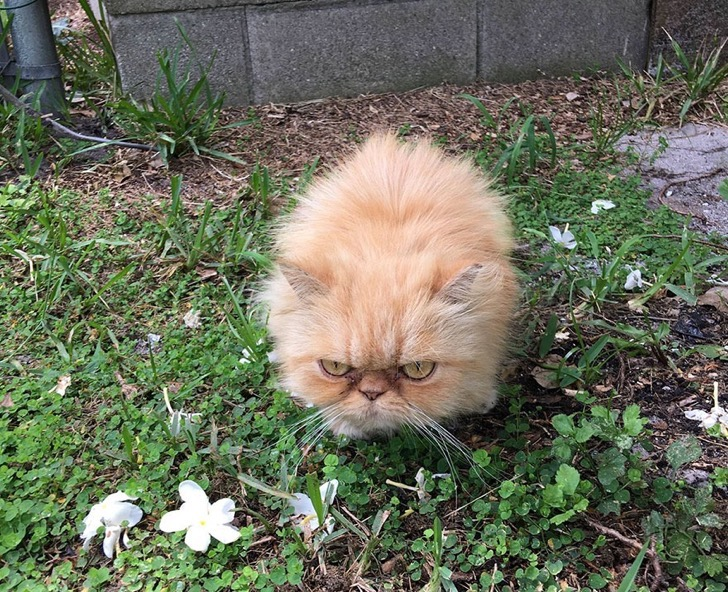 grumpy-cat-adopted-ginger-garfield-5